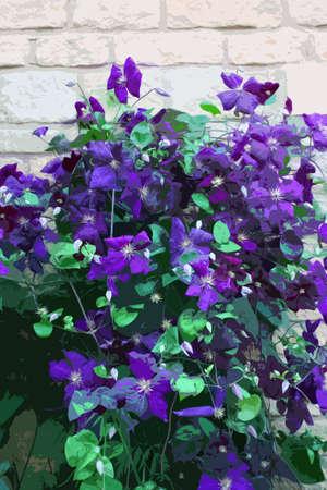 horticulture: Beautiful blue purple flowers