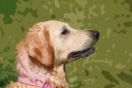 gundog: a beautiful golden retriever pet gundog Illustration