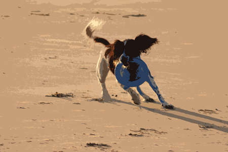 english countryside: Working type english springer spaniel pet gundog running on a sandy beach; Illustration