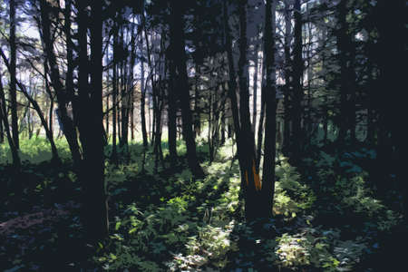 shafts: Shafts of sunlight shining through trees in a forest