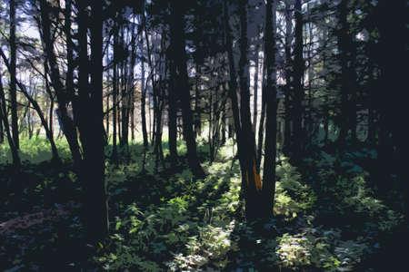 shafts: Wellen von Sonnenlicht durch B�ume in einem Wald Illustration