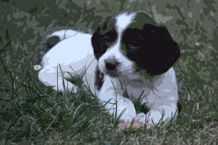 puppydog: very cute liver and white working type english springer spaniel pet gundog puppy Illustration