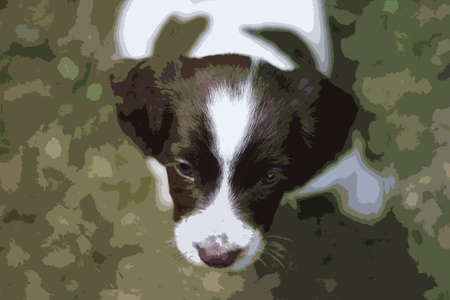 doggies: Very cute young liver and white working type english springer spaniel pet gundog puppy