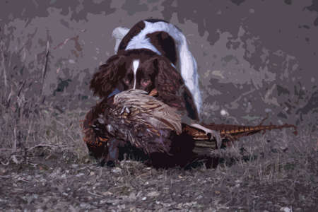 carrying: working type english springer spaniel carrying a pheasant Illustration