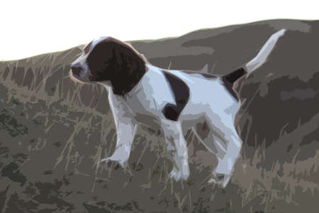 doggies: very cute liver and white working type english springer spaniel pet gundog puppy Illustration