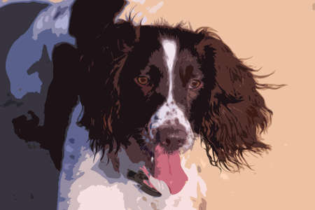 springer spaniel: working type english springer spaniel pet gundog Illustration