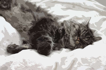brown haired: a very cute long haired black and brown tabby cat lying on a white background