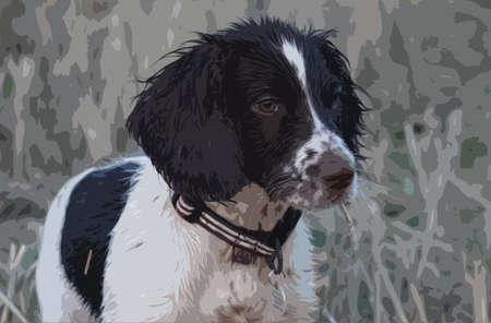 een zeer natte werkende typee Engels Springer Spaniel hond jachthond