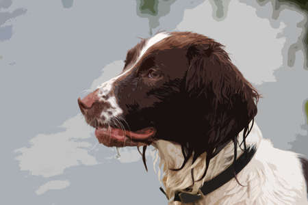 damp: a very wet working typee english springer spaniel pet gundog