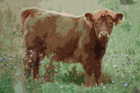 haired: long haired brown highland cattle cow Illustration