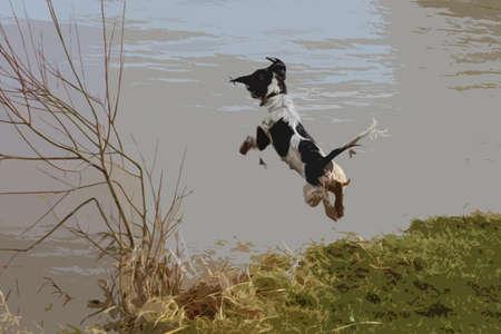 jumping into water: working type english springer spaniel pet gundog jumping into water Illustration