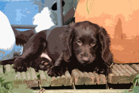smal: very cute smal liver working cocker spaniel pet gundog
