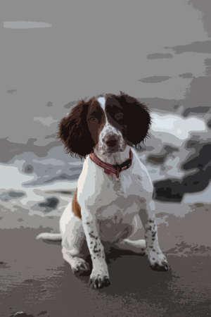 english countryside: cute working type english springer spaniel pet gundog on a sandy beach Illustration
