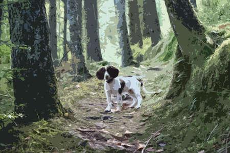 puppydog: working type english springer spaniel stood in a wood