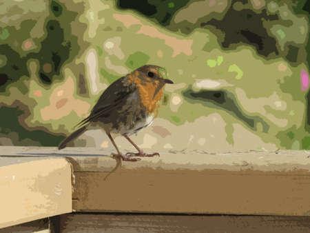 red breast: a beautiful robin red breast bird Illustration