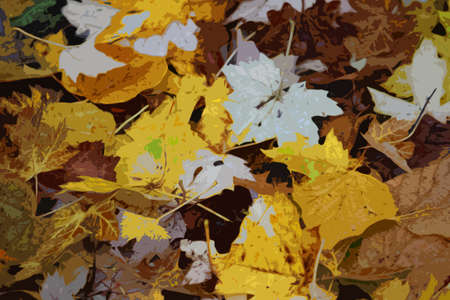 fell: yellow and white maple leaves on the ground at batsford arboretum Illustration