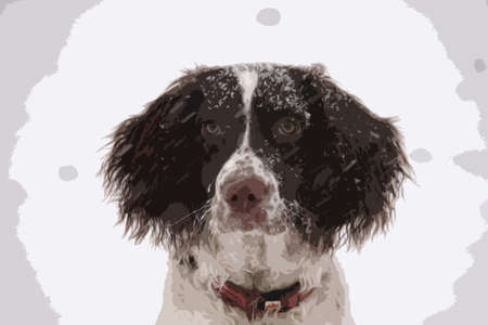 doggies: liver and white working type english springer spaniel pet gundog in winter snow Illustration