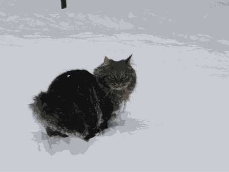 long haired: cute long haired tabby pussycat playing in the snow
