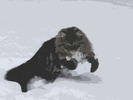 haired: cute long haired tabby pussycat playing in the snow