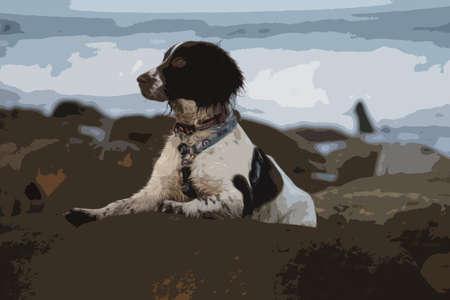 puppydog: cute working type english springer spaniel pet gundog on a rock at the beach Illustration