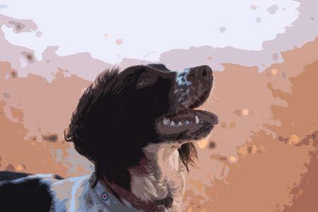 puppydog: cute working type english springer spaniel pet gundog on a sandy beach Illustration