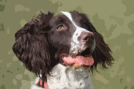 gundog: working type english springer spaniel pet gundog Illustration