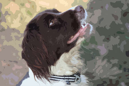 doggies: a very cute liver and white working type english springer spaniel pet gundog
