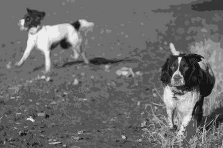 puppydog: liver and white working type english springer spaniel pet gundog running