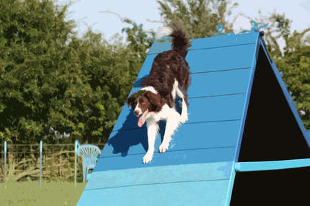 enjoyment: A very cute springer cross collie dog on agility equipment