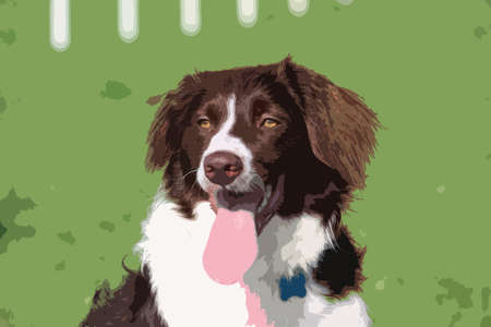 doggies: very cute liver and white collie cross springer spaniel pet dog