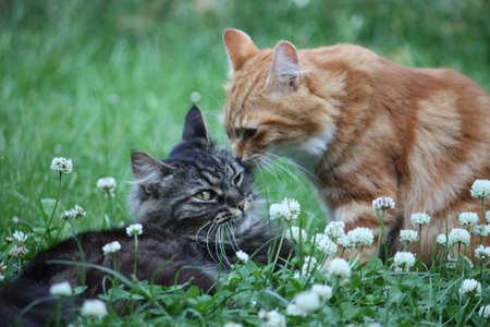 cute ginger and tabby cats in long grass
