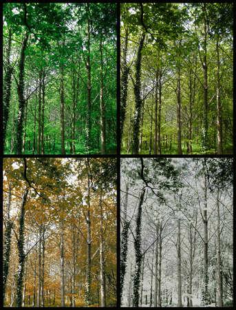 estaciones del a�o: Four Seasons de un bosque