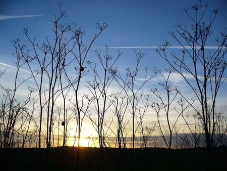 field of dry grass weed against blue sky sunset photo