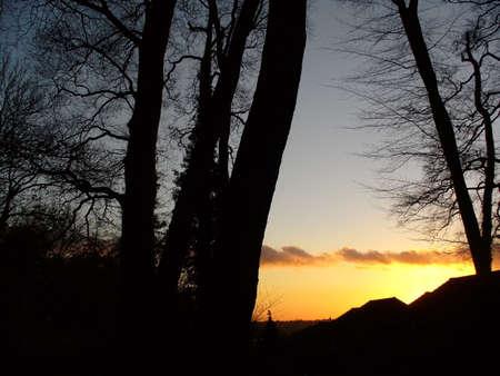 silhouette arbre hiver: Silhouette darbre dhiver avec un coucher du soleil orange dans le fond Banque d'images
