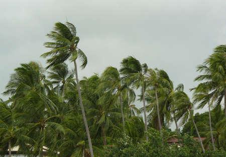 viento soplando: fuerte viento que sopla las palmeras en una tormenta