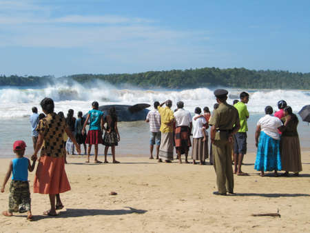 beached: People looking at dead Whale