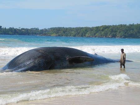 whale: Beached dead Whale