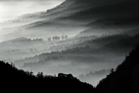 Misty forest - Stunning image, showing many layers of pine tree forest on a misty autumn morning. Stock Photo