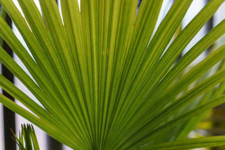green palm fronts from nice plants