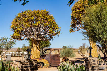 quivertree old car namibia fishriver roadhouse