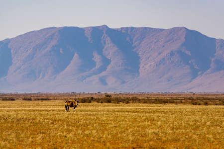 Oryx on a plain in Namibia mountain Stok Fotoğraf