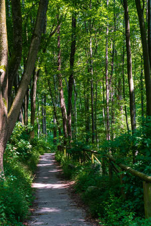 Walking trails in a quiet, serene, peaceful forest park with vibrant green trees and vegetation