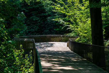 an old wood bridge with moss in the on a hiking trail. brown, green