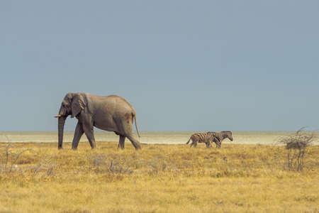 Etosha National Park/Namibië - 05/12/2019 foto van dier in Etosha National Park Stockfoto