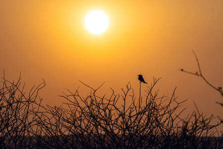Sunset Through Trees Silhouettes at namibia africa 写真素材