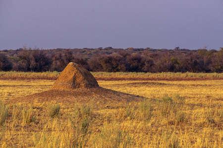 Termite mound in the Lake Manyara National Park - Tanzania, East Africa