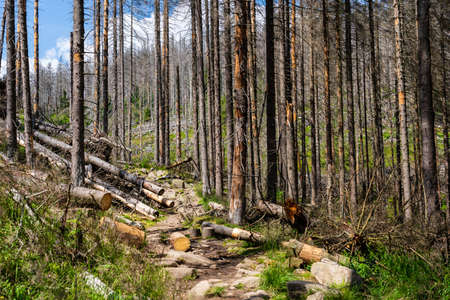View of an hiking trail in the Harz national park in Germany next to the city of Königshütte where the forest has been devastated by bark beetles Stock Photo