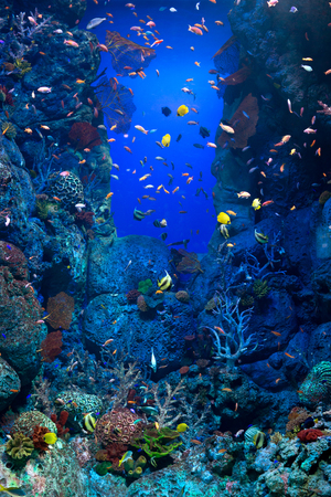 fished: This image shows a giant fished tank filled with tropical fish.