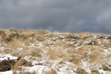 wind blown: This image shows the Wind Blown Yellow Grass Covered in Snow - Tongariro Crossing, New Zealand