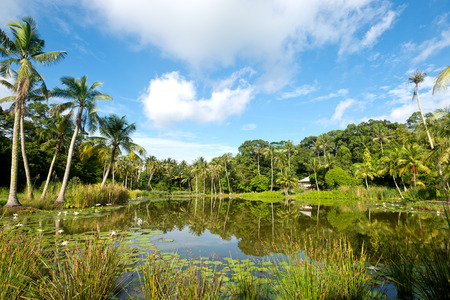 pulau: This image shows a Pond Scene on Pulau Ubn, Singapore Stock Photo